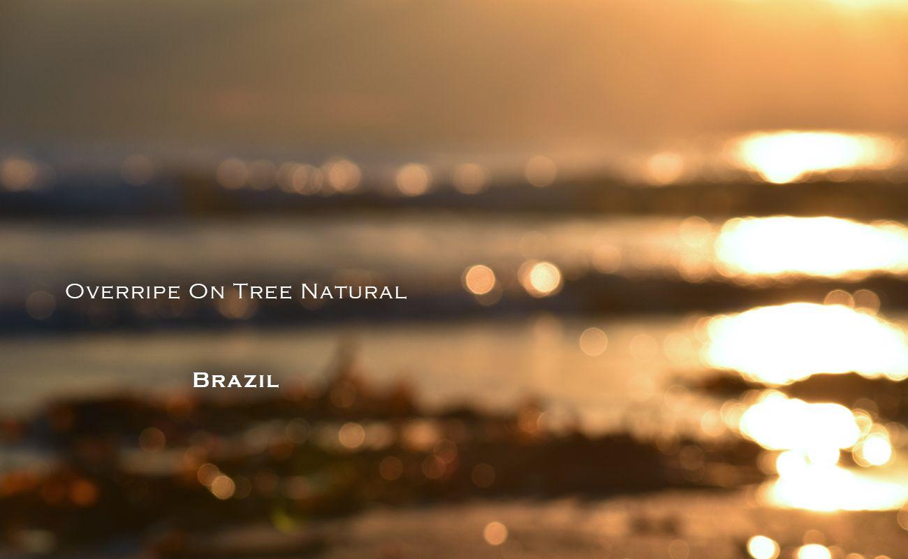 ブラジル オーバーライプ オンツリー ナチュラル シナモンロースト MORIFUJICOFFEE スペシャルティコーヒー通販