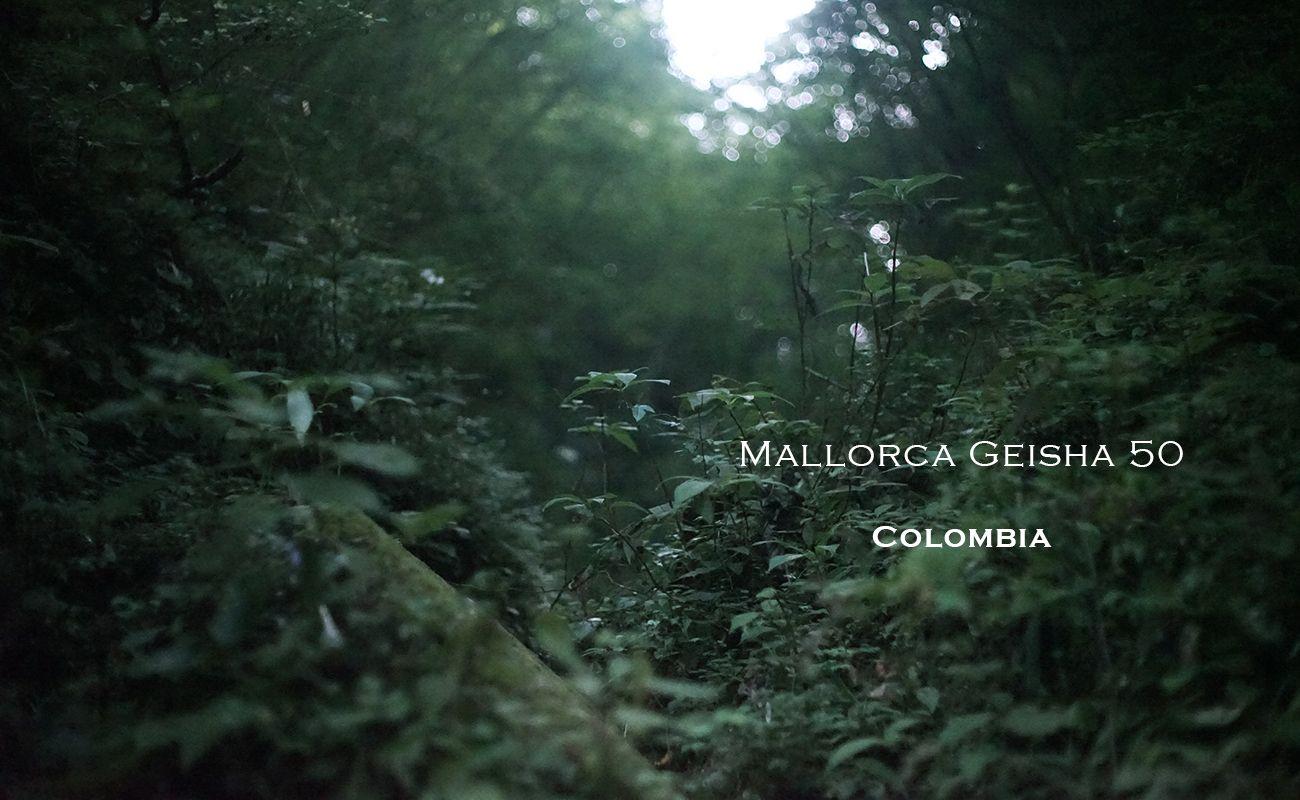 コロンビア マジョルカ ゲイシャ50 ナチュラル ミディアムロースト スペシャルティコーヒー通販
