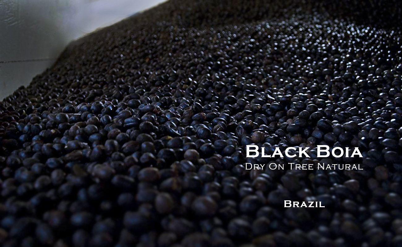 ブラジル ドライオンツリー ナチュラル ブラックボイア フルシティーロースト スペシャルティコーヒー通販 MORIFUJI COFFEE