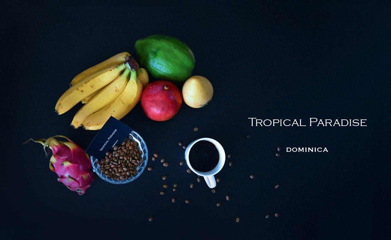 ドミニカ・トロピカルパラダイス ハイロースト スペシャルティコーヒー通販 MORIFUJICOFFEE