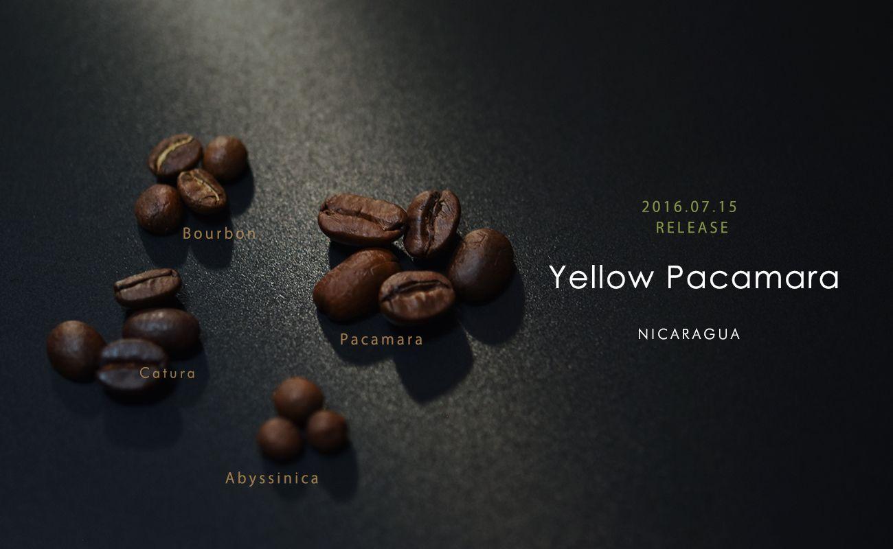 ニカラグア イエローパカマラ シティーロースト スペシャルティコーヒー通販